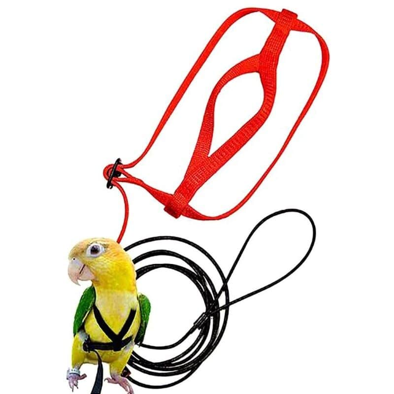 Parrot Bird Harness Leash Outdoor Flying Traction Straps Band Adjustable Anti-Bite Training Rope 1