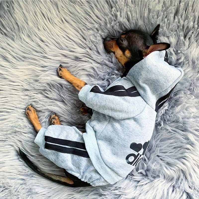Pet Clothes French Bulldog Puppy Dog Costume Pet Jumpsuit Chihuahua Pug Pets Dogs Clothing for Small Medium Dogs Puppy Outfit 1