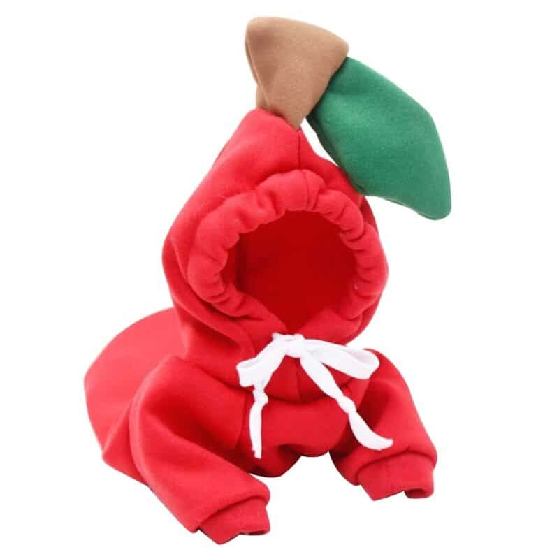 Hoodies for dogs in many various cute designs